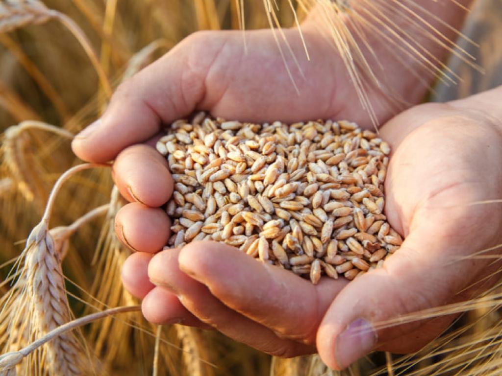 Pasta 100% de trigo